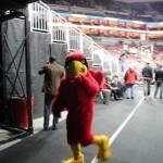 louisville-cardinal